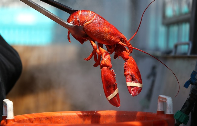 Brewer Makes Beer Out of Live Lobsters, Sea Salt