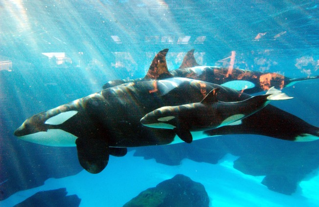 SeaWorld San Diego to Limit Part-Time Hours