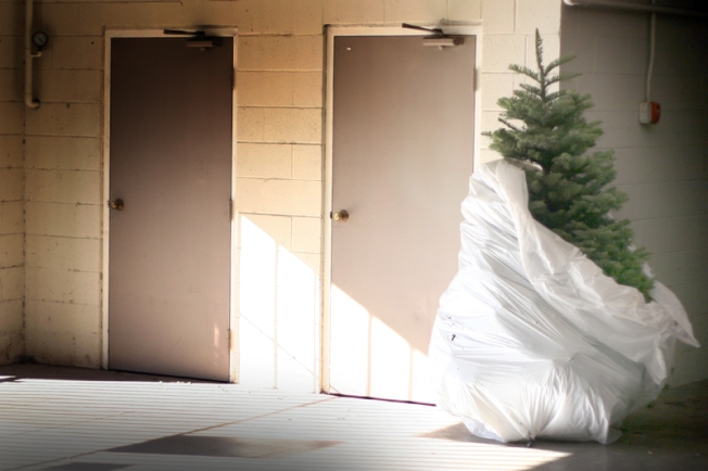 Oh Christmas Tree, It's Time to Dump You
