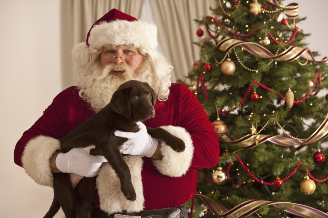 Monarch Beach Resort: Pet Photos with Santa