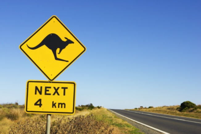 'Laugh About It and Heal': Cyclists 'Jumped' by Kangaroo in Australia