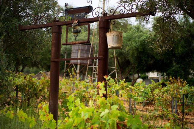 Research Shows Economic Benefits of San Diego Wineries