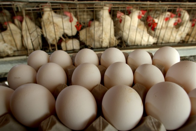Salmonella Outbreak Prompts National Egg Recall