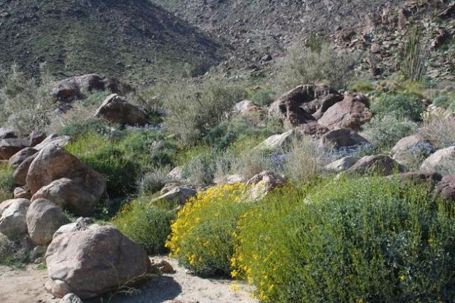 Does the 'Lady in White' Still Haunt Anza Borrego?