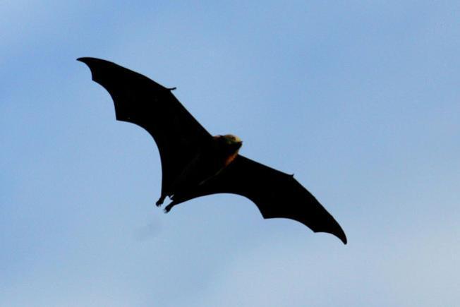 Flap Flap, Bat Week Is Here