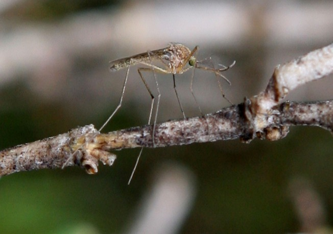Ouch! Mosquito Clouds Draw Welts