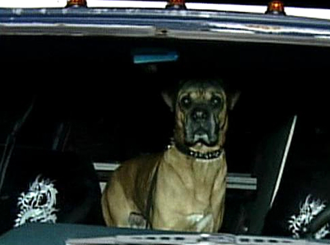 Range Rover: Long Island Dog Takes Van for a Spin