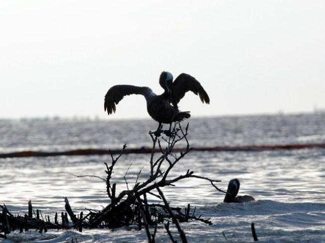 Gulf Oil Disaster Roils Calif. Legislative Race
