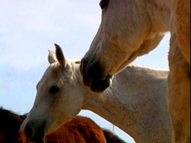 Healing Horses to Battle War Trauma