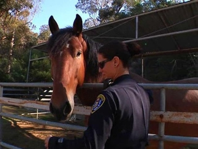 Police Horses Going Once, Going Twice