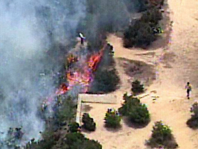 Fire Sparked on Torrey Pines State Reserve