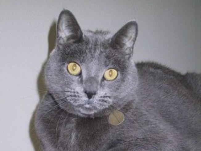 Suspicious Cat Deaths on Same Street