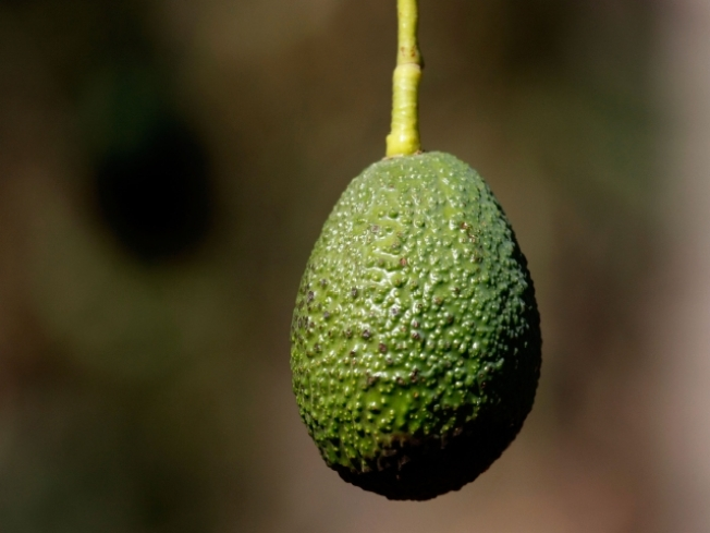 Suspected Avocado Thief Arrested
