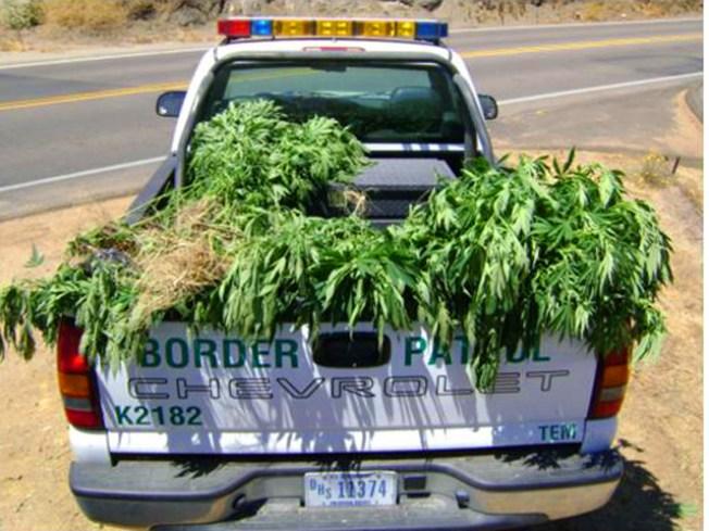 Border Patrol Finds 1,000-Plus Pot Plants