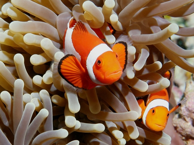 Transgender Clownfish Controversy