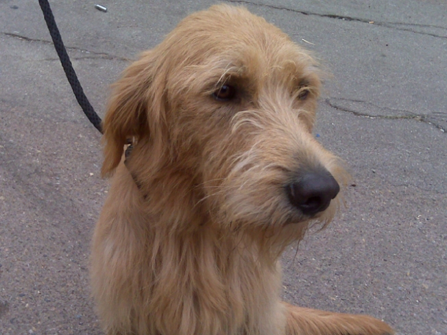 "No More ""Hard Knock Life"" for This Star"