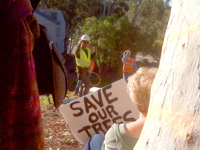 Tree Cutting Plans Sparks Opposition