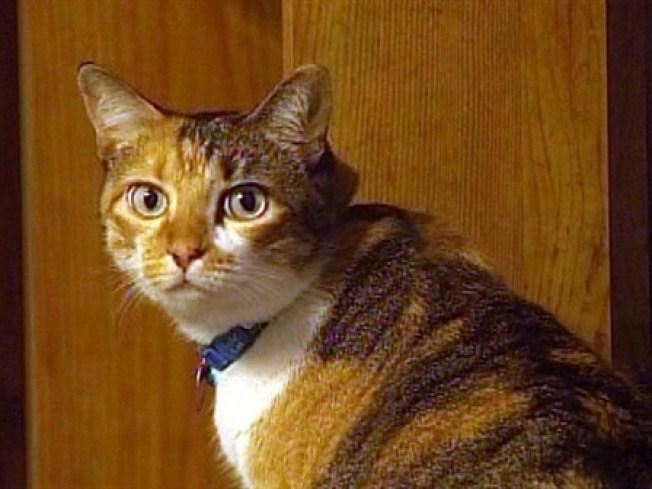 Ruthless Cat Butcher Kills Again