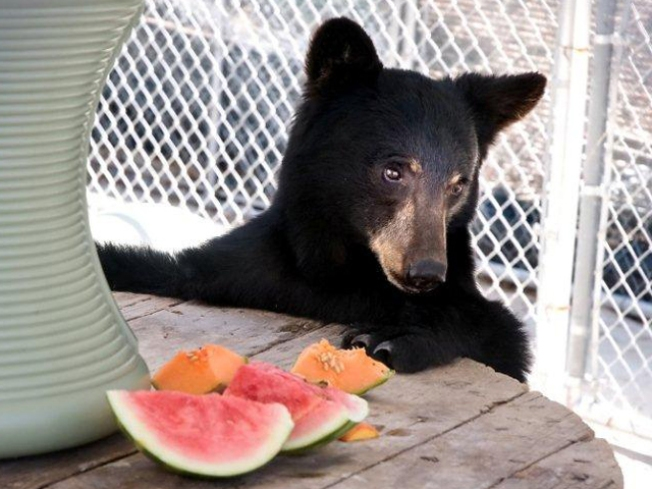 A New Home Is This Bear's Necessity