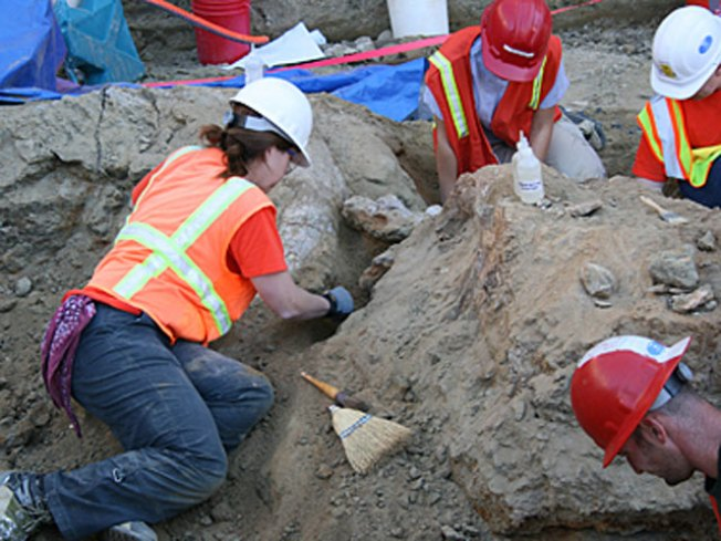 Dig This: Fossils Revealed