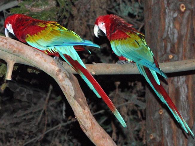 Zoo Star Attraction Recaptured
