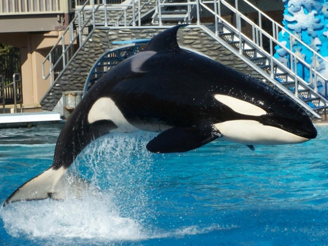 Busch Reels in SeaWorld Buyer