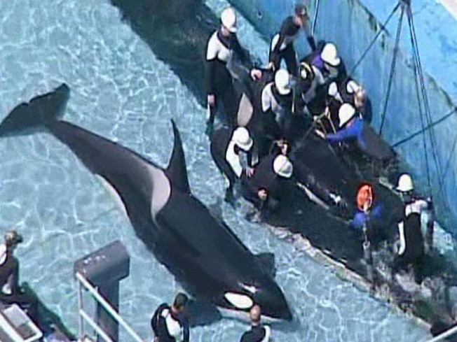 SeaWorld San Diego is in Mourning