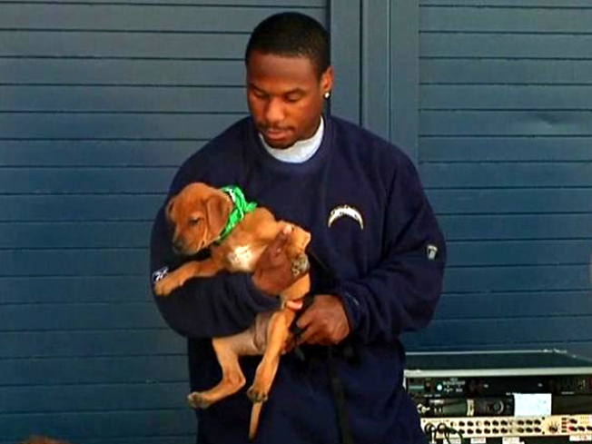 Speedy Sproles Shows Puppy Love