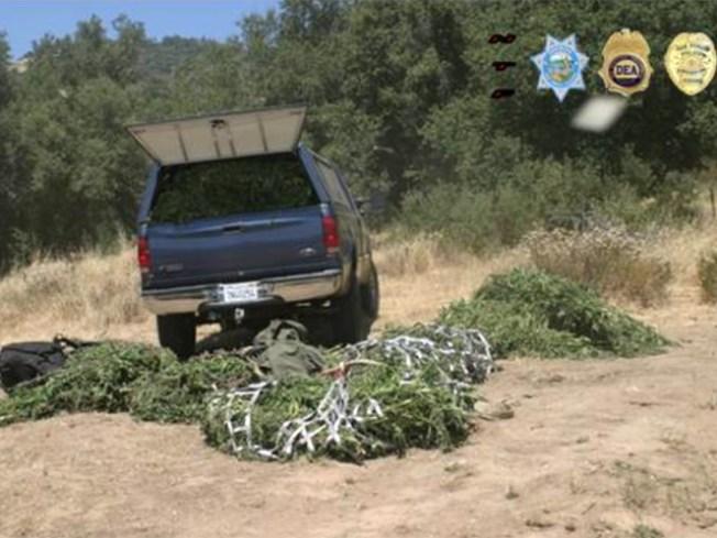 Legalizing Pot Won't Cut Down on Crime: Study