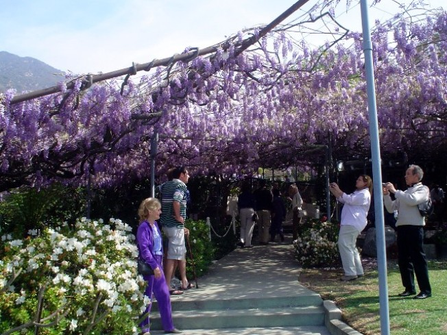 Yep, It's the World's Largest Flowering Plant