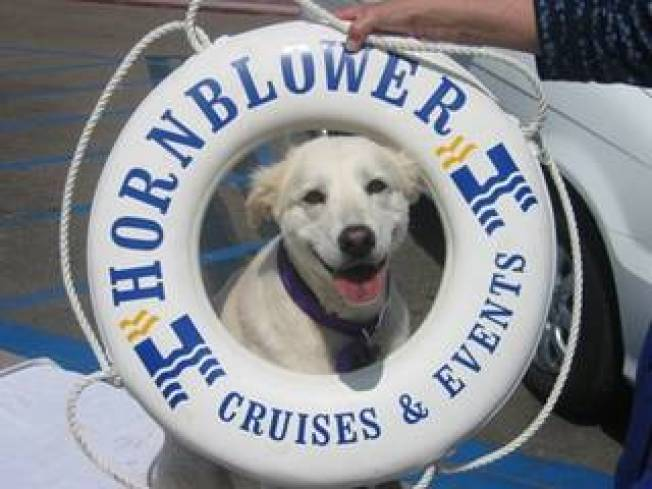 Now Embarking: Doggie Cruise
