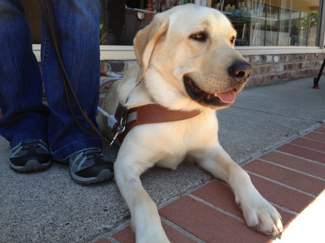 Mission Brewery Hosts 'Pints for Pups'