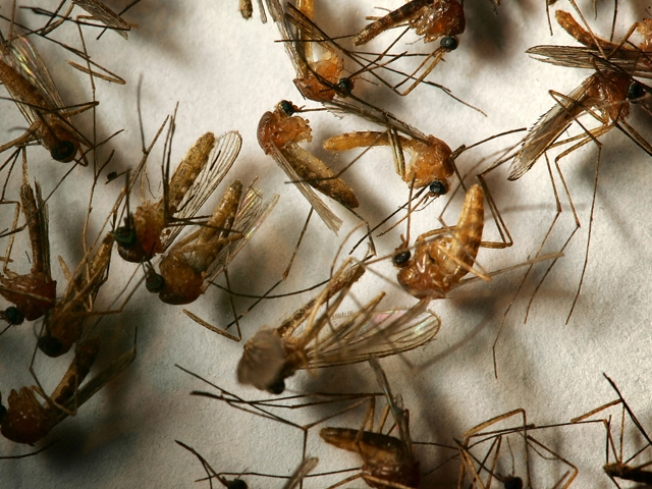 County: West Nile Virus Is Back