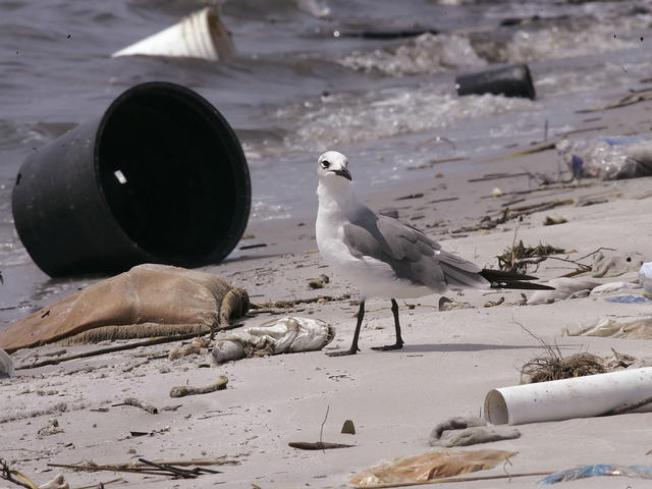 Rise Above Plastics, San Diego
