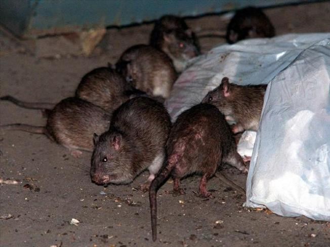 Prevent Rodents From Becoming Residents - NBC 7 San Diego