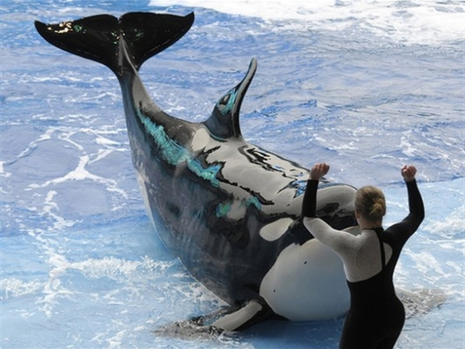 SeaWorld Trainers to Take the Plunge