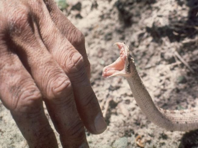 Ouch! Snake Bites on the Rise