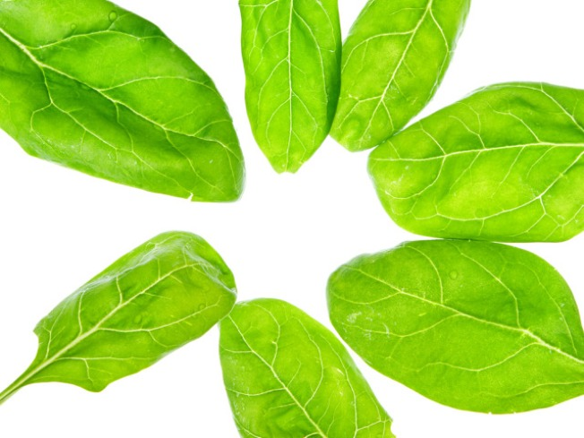 Bagged Spinach Recalled