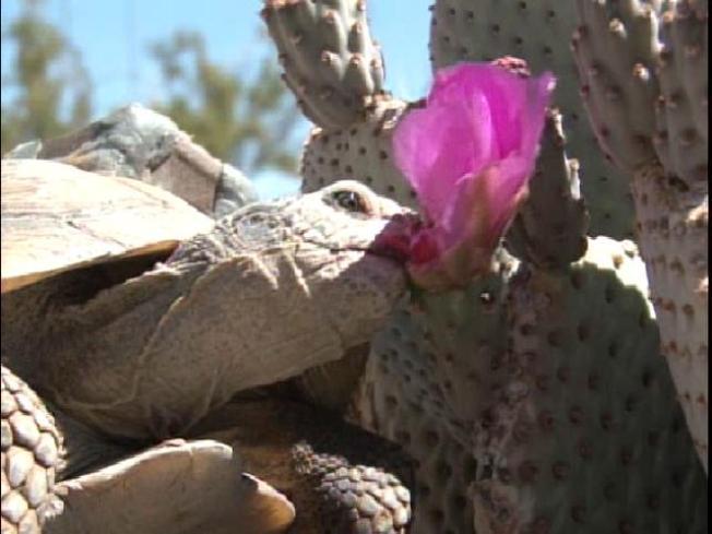High-Tech Tortoises Hit the Wild