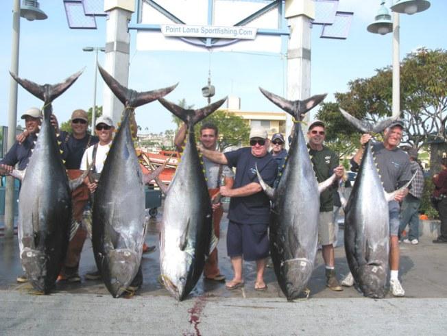 Holy Tuna Nbc 7 San Diego
