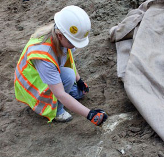 Mammoth Find Yields Whale of Tale