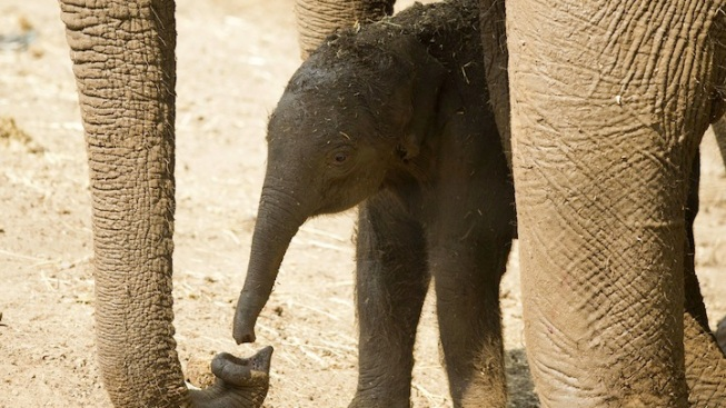 Bob Barker Welcomes Elephants to Calif. Sanctuary