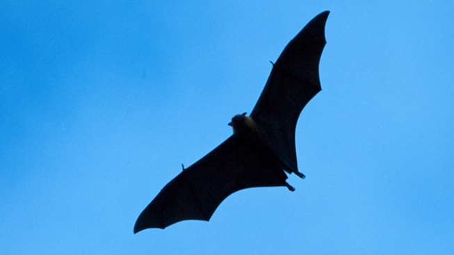Bat Terrorizes Passengers on Airplane