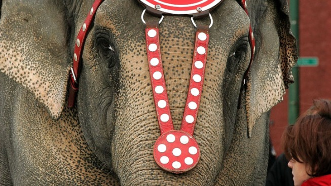 Animal Rights Group Settles Lawsuit with Ringling