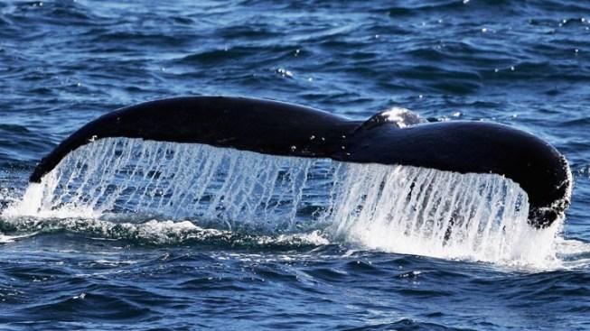 Humpback Whale Washed Ashore Near Long Beach