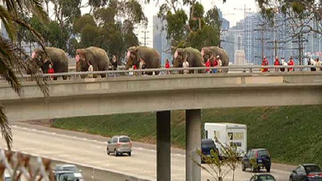 Elephants March Through Old Town