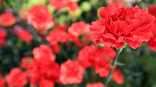 Memorial Day Flower Drop