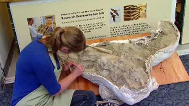Ice-Age Bison Fossil Found in San Diego