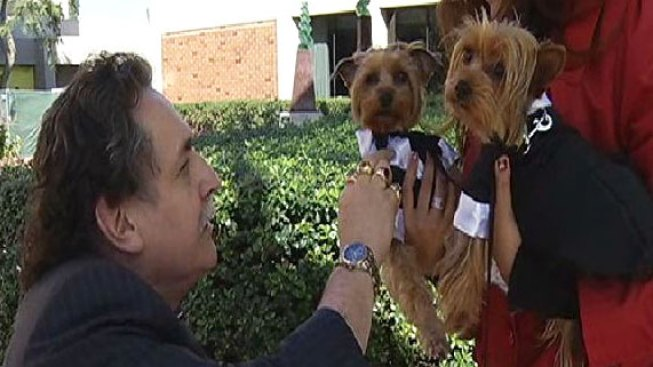 Blessing of the Therapy Dogs at Scripps Memorial La Jolla