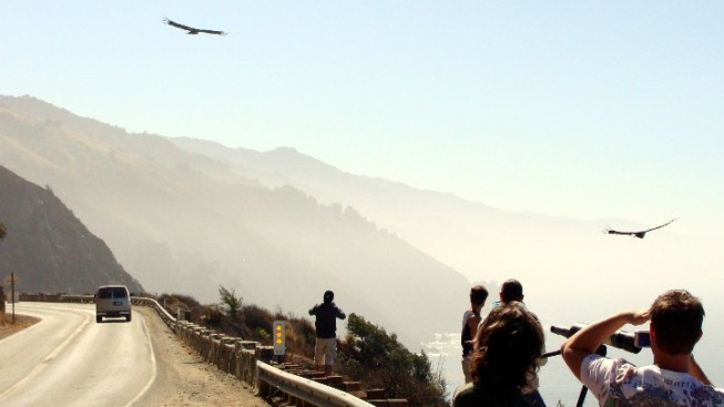 Condors Fundraiser: Big Sur Bash